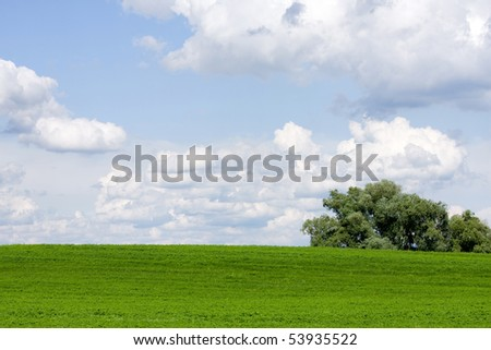 A beautiful green field (alfalfa) with white clouds