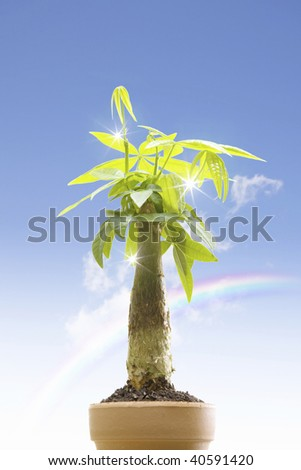 A beautiful green plant and blue sky background.