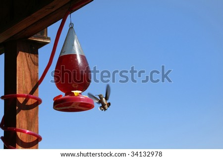 A beautiful hummingbird at a feeder in the summer. - stock photo