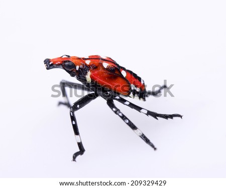 A beautiful insect isolated on a white background   - stock photo