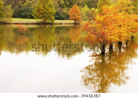 A beautiful inspirational scene of Autumn Cypress Trees reflecting in the water, a wonderful fishing area in Tennessee, horizontal, copy space - stock photo