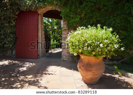 A beautiful ivy door and pot plant on patio