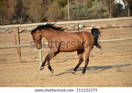 bay horse coloring pages - photo#17