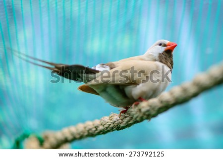 a beautiful little bird spring nature theme - stock photo