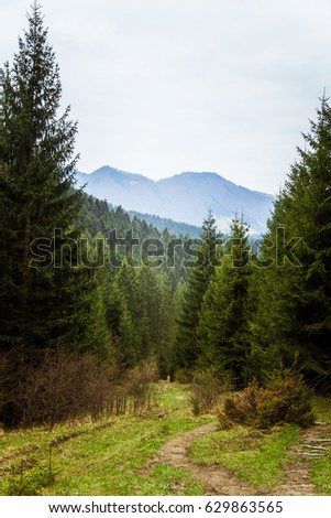 A beautiful mountain forest landscape. Mala Fatra mountains in Slovakia