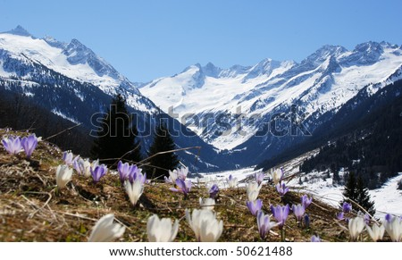 A beautiful mountain landscape with a flower meadow in the foreground.