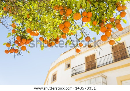A beautiful orange tree with a building in the backround in Tarifa,Andalucia,Spain - stock photo