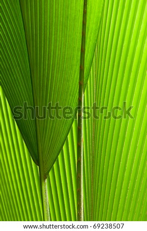 a beautiful palm-leaf composition style