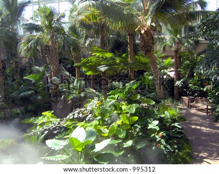 A beautiful park of tropical foiliage, indoors. - stock photo