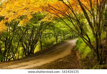 A Beautiful Peaceful Autumn Scene - stock photo
