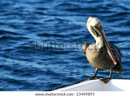 A beautiful pelican sitting on the side of aboat - stock photo