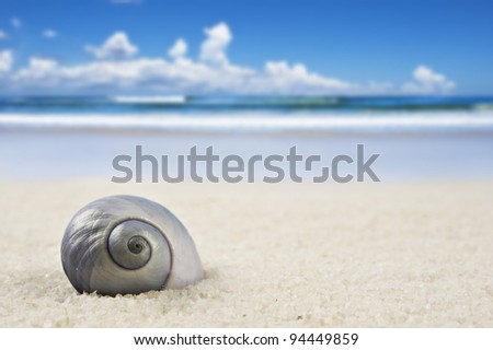 a Beautiful perfectly shaped sea shell on the beach - stock photo