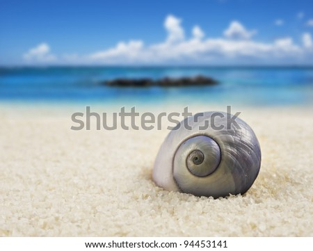 a Beautiful perfectly shaped sea shell on the beach - stock photo