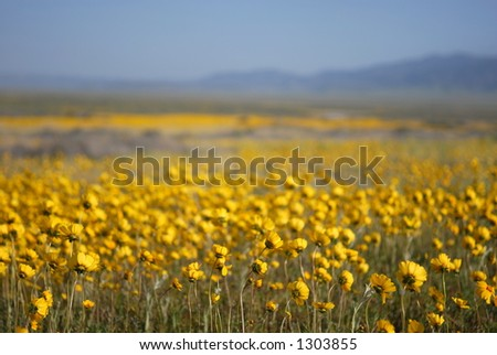 A beautiful photograph of a field of yellow wildflowers. - stock photo