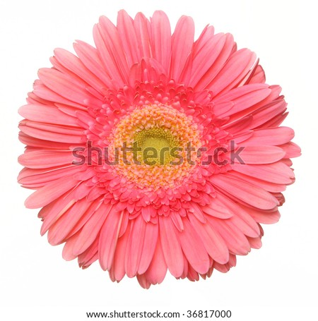 a beautiful pink flower - stock photo
