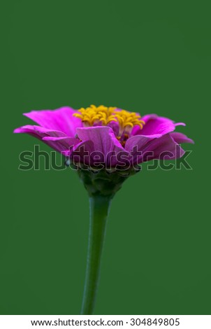 A beautiful pink flower with a green background - stock photo
