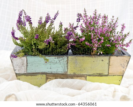 A beautiful pink heathers in old-fashioned flower-pot - stock photo