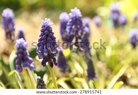 a beautiful purple flower - stock photo