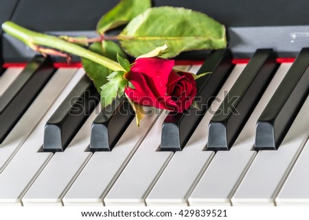 A beautiful red rose placed on piano kays.