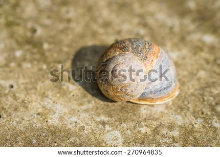 A beautiful snail shell on a stone surface - stock photo