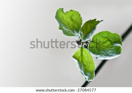 a beautiful spring branch isolated
