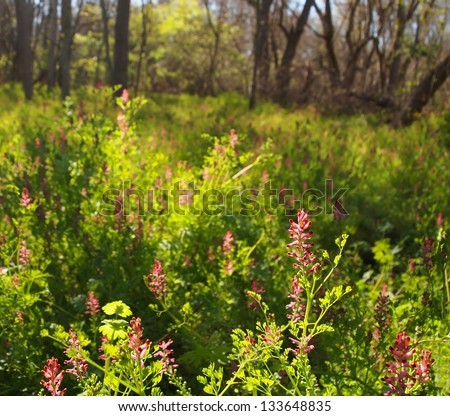 A beautiful spring meadow landscape with sunlight beaming through purple flowers in a wetland area. - stock photo