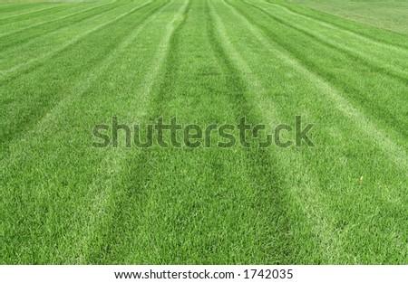 a beautiful striped lawn - stock photo