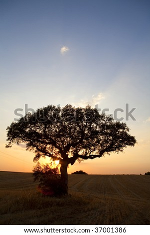 a beautiful sunset falling behind a tree