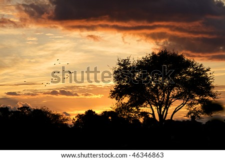 A beautiful sunset glow with trees that are backlit - stock photo