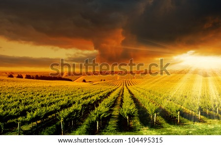 A Beautiful Sunset over an Adelaide Hills winery - stock photo