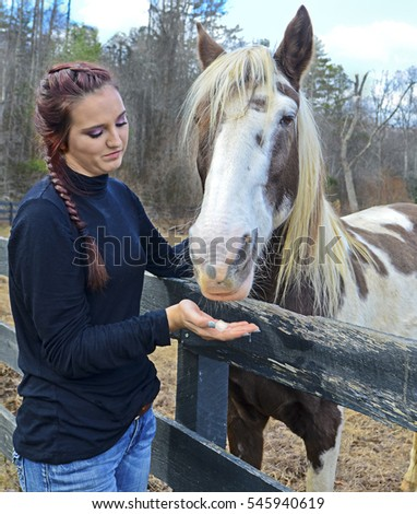 A beautiful teenage girl at the fence offering a horse a sugar cube.