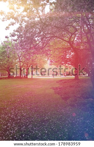 a beautiful tree in a pretty field done with a retro vintage instagram filter  - stock photo