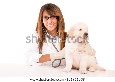 A beautiful veterinarian with a golden retriever puppy - stock photo