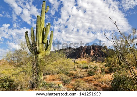 A beautiful vista in the Sonoran Desert of Arizona, USA. Many cacti, hills and mountains are seen here in the Superstition Mountains. Gorgeous colors and clouds abound on this sunny day. - stock photo