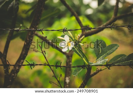 A beautiful white flower behind a barb wire fence - stock photo