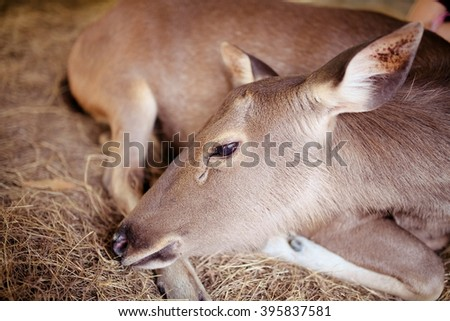 A beautiful young deer resting in some foliage