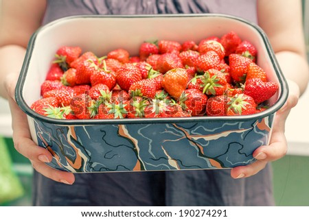 A beautiful young woman holding up a very large bowl of fresh strawberries. Gorgeous slender young brunette woman with white bowl of fresh strawberries. Really a lot of fresh berries. - stock photo