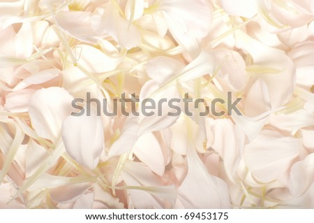 A bed of soft creamy pink petals form an abstract pattern - stock photo