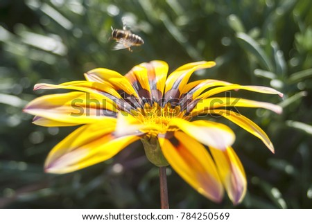a bee flying after feeding on the the flower