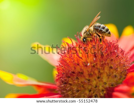 A bee on a flower - stock photo