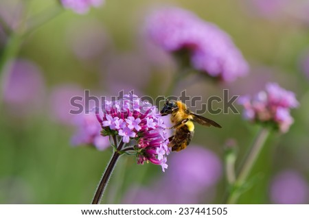 A bee on small purple flower - stock photo