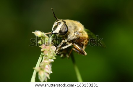 A bee on the grass shoots