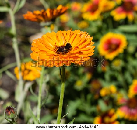 A bee pollinates a flower in the garden