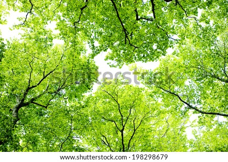 A Beech Forest Of Fresh Green - stock photo