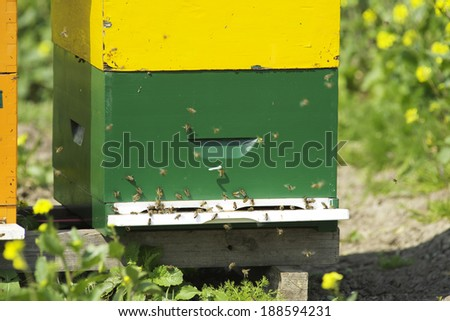 a beehive in a field with yellow flowers - stock photo