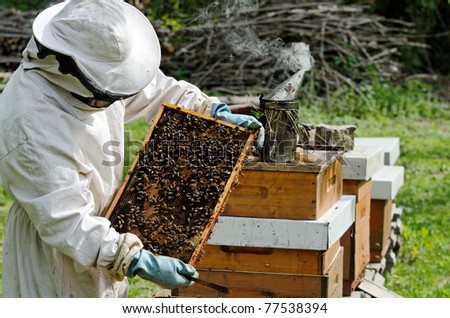 a beekeeper at work - stock photo