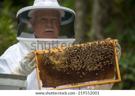 A beekeeper checks on his bees while being dressed in protective bee apparel on a farm in North Carolina. - stock photo