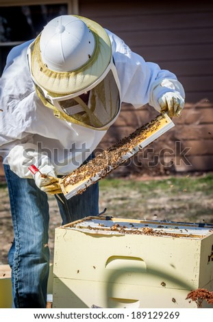 A beekeeper inspects a frame she's pulled out of the hive - stock photo