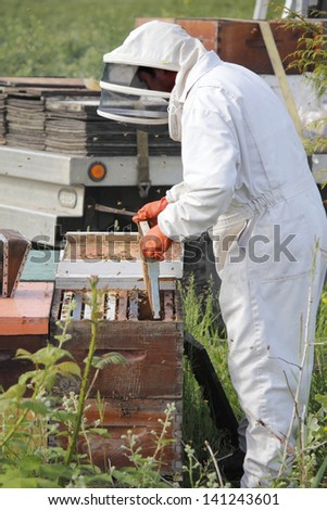 A Beekeeper removes a plate from a man made beehive box/Removing Plate/A Beekeeper removes a plate from a man made beehive box