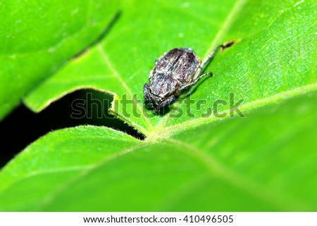 A beetle on leaf